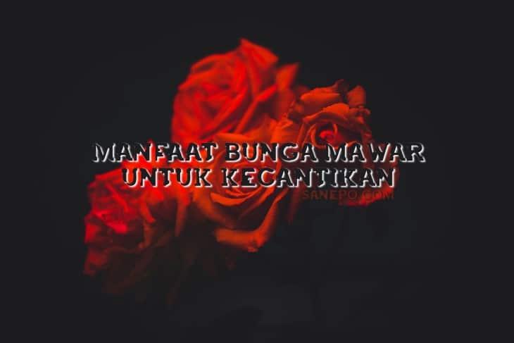 Manfaat Bunga Mawar Untuk Kecantikan